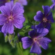 flowers001